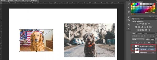 layer trong photoshop là gì 2