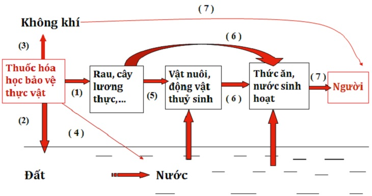 Cách vẽ sơ đồ trong Word